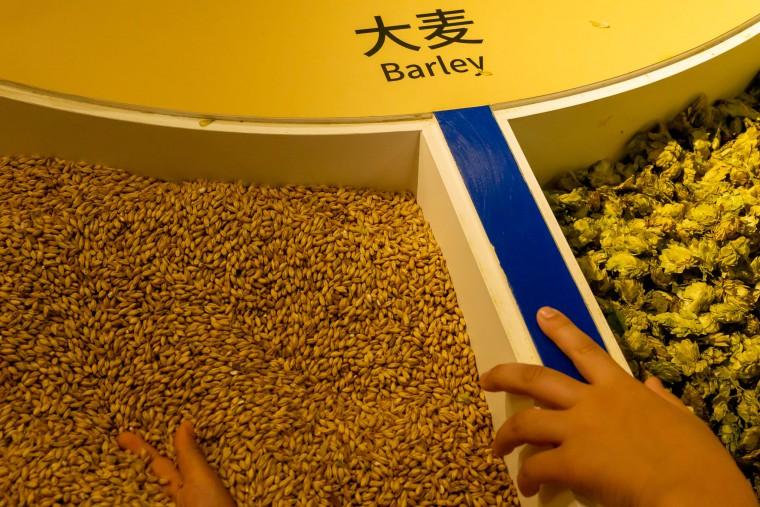 写真:大麦とホップ