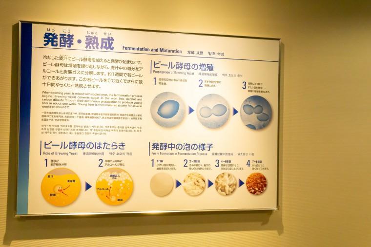 写真:発酵・熟成の図