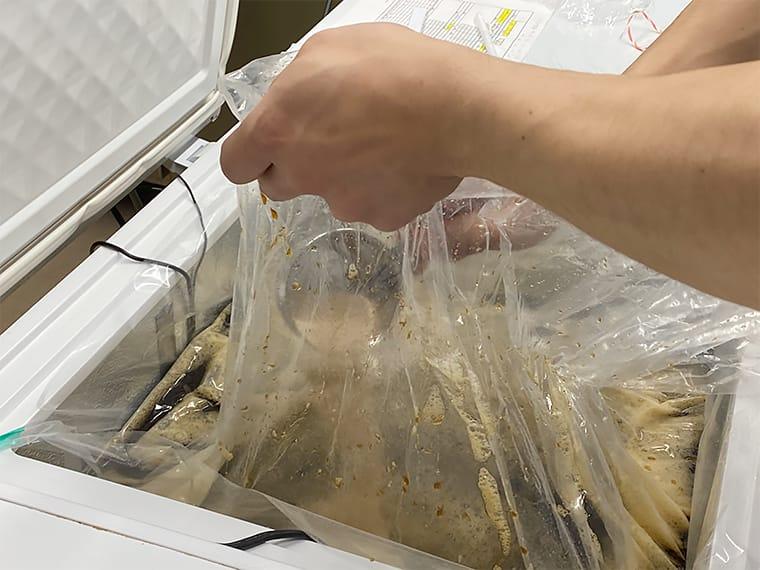 写真:麦汁に酵母を入れる様子