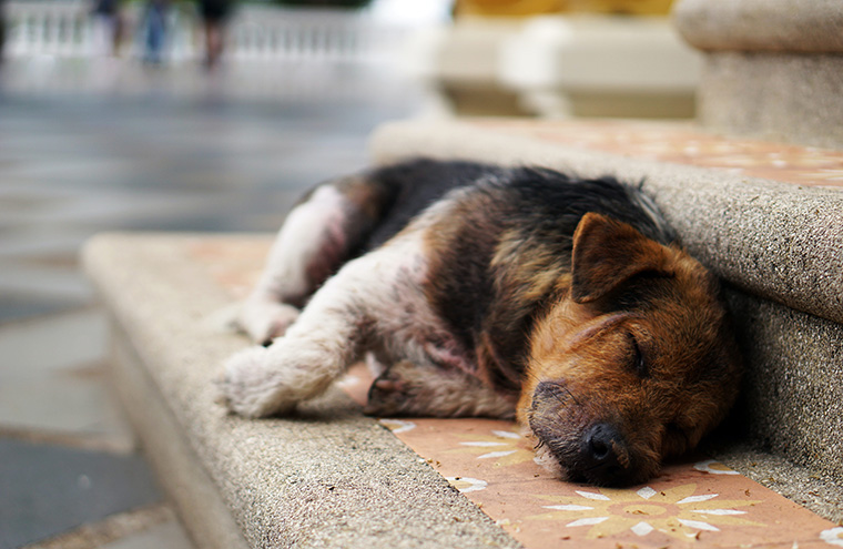 写真:寝ている犬