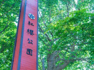 写真:紅櫻公園